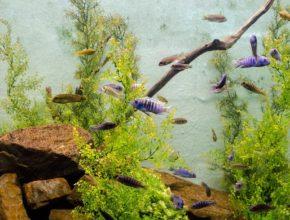 algae omega 3 source