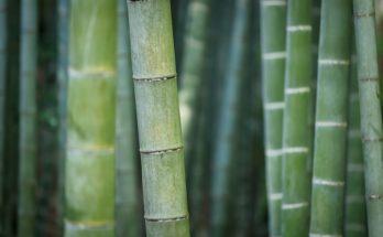 bamboo silica hair growth